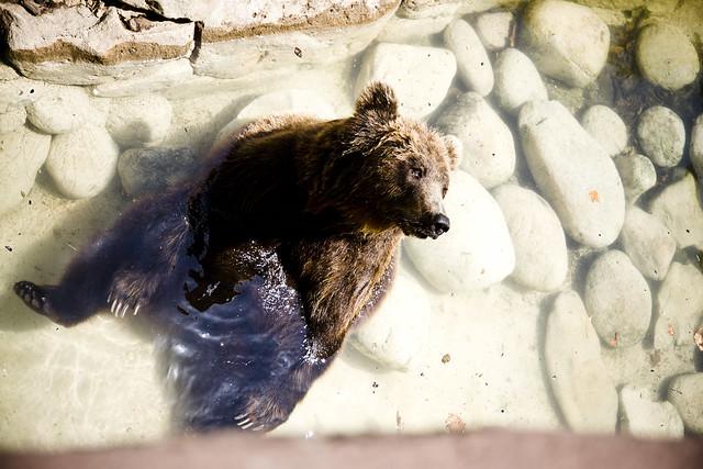 Barcelona Zoo Bear