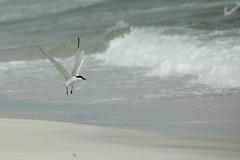 Birds-0324