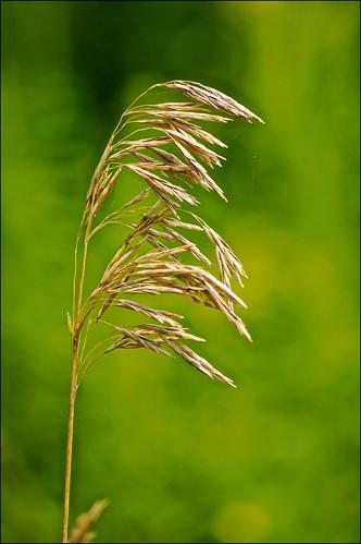 ontario green grass bokeh seeds cobourg lucaspointpark