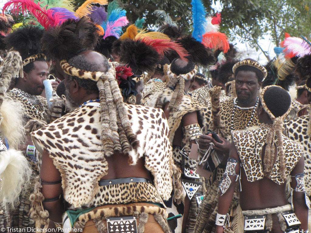 Shembe followers dressed in leopard skins