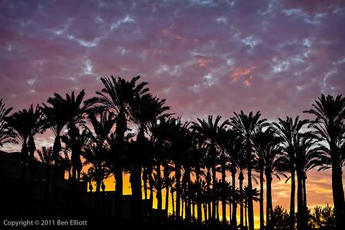trees arizona usa skies sunsets scottsdale vibrantcolours gaineyranch