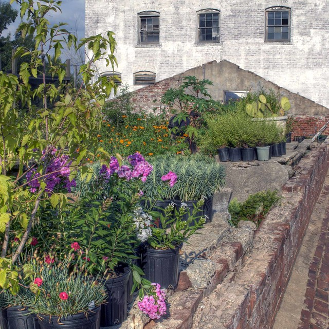 Oakland Cemetery: Greenhouse ruins