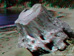 Tree Stump Driftwood - 3D anaglyph