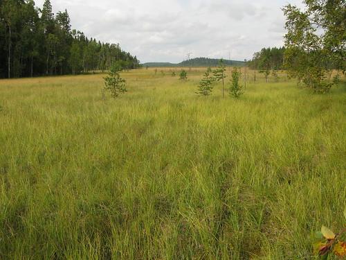 nature finland geotagged europe fin ruovesi 2011 siikaneva geo:lat=6182880712 geo:lon=2418716088