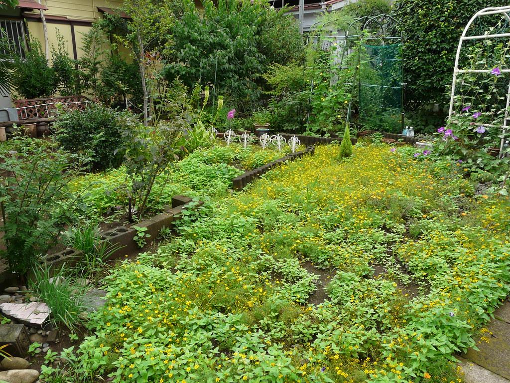 Impromptu Hanging Garden