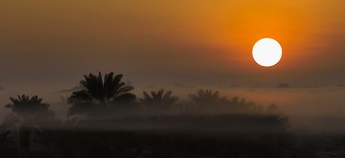 leica trees sunset orange sun mist tree misty sunrise bahrain palm apo summicron asph mohammad m9 75mm taqi ashkanai