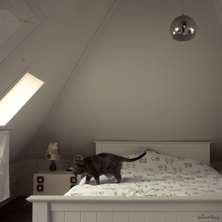 bedroom + cat