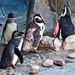 Aves - Investigación Zoológicos 2011