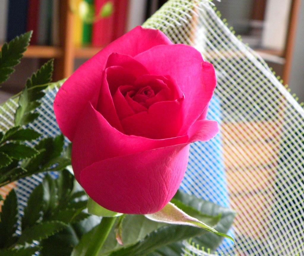 Per un'Amica molto speciale.Felice Compleanno Anita!!!!…   Flickr