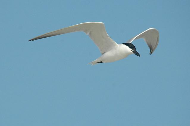 Birds-2072