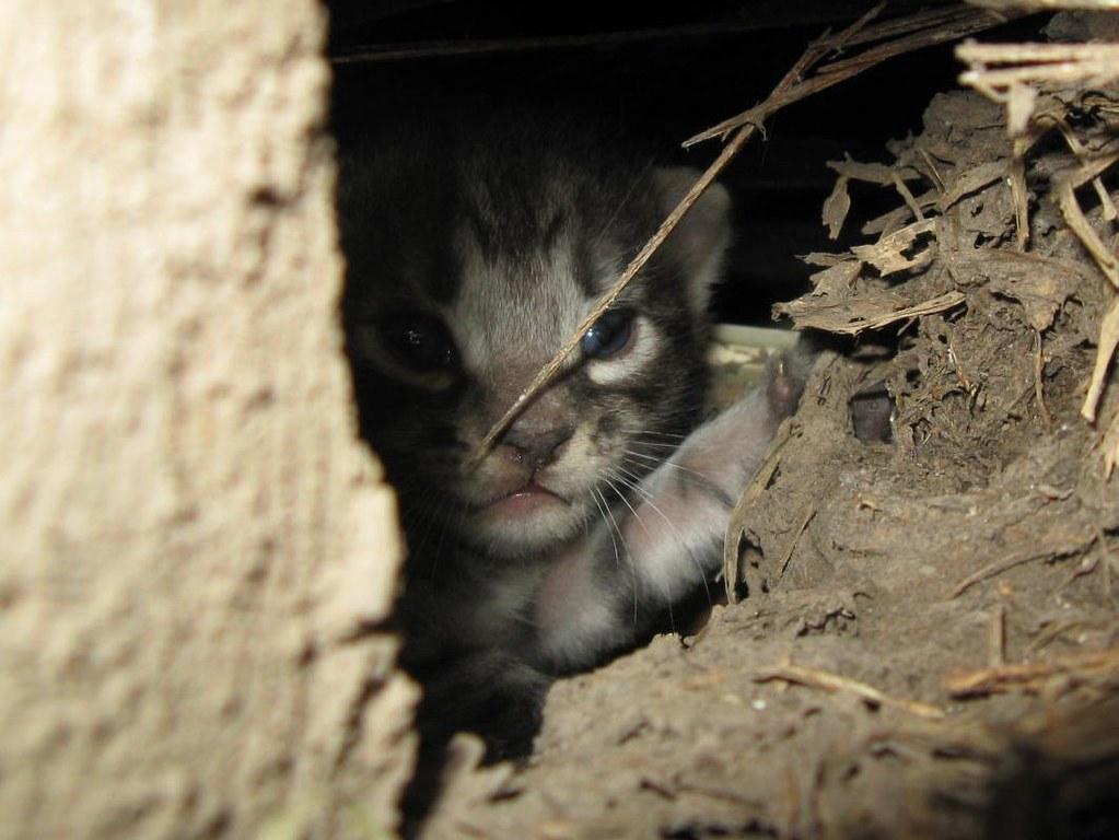 debi s kids here very little s most interesting flickr