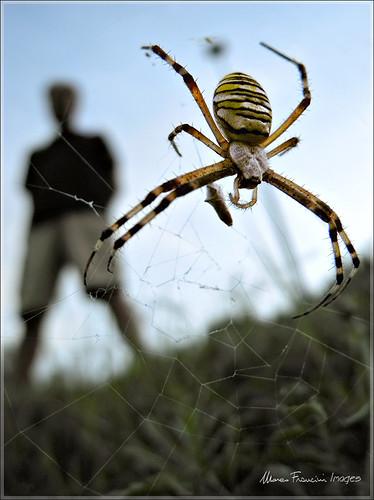 people spider nikon spiderman ragno marcofrancini arunte marcofranciniphotography