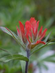 火, 2011-08-09 15:11 - Red Paintbrush