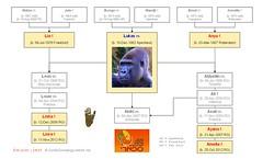Gorilla Family - Tel Aviv