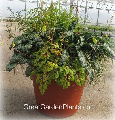 Shade gardening container flickr photo sharing - Container gardens for shade ...