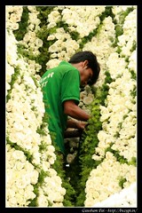 Busy at work at the Lalbagh Flower Show