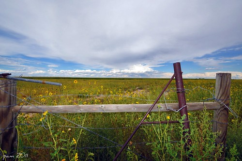 Fence And Sunflowers