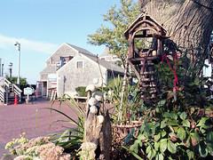 Fairy Housing