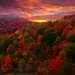 Fall Foliage Photography