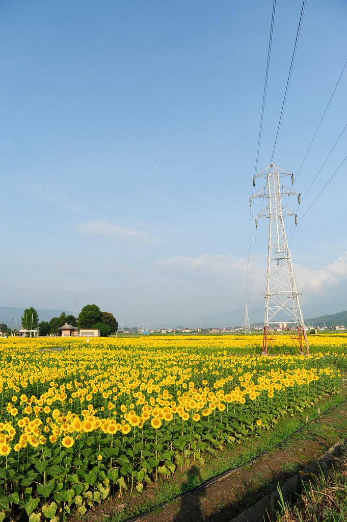 20110818 Ogaki-Himawari 1