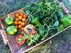 A little summer harvest!