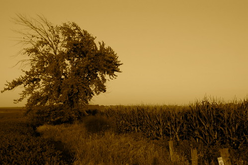 tree cornfield iowa dickens