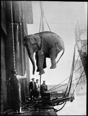 Hoisting the elephant