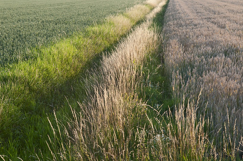 sunset groen lith polder strijklicht zonsdondergang dorpaanderivier natureselegantshots avillageneartheriverside lithdorpaanderivier blinkagain groentinten scheidingssloot separationditch