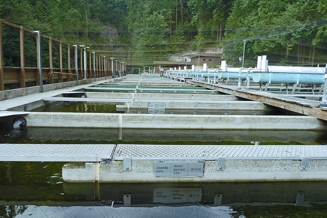 Capilano fish hatchery young rearing tanks flickr for Fish hatchery jobs
