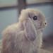 Bunny by {katesea}