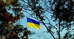 Ukrainische Flagge vor der Botschaft der Ukraine in Washington, DC, USA. Photo: Funky Tee / flickr Creative Commons Licence Namensnennung, Weitergabe unter gleichen Bedingungen