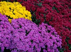 Montpelier Flowers