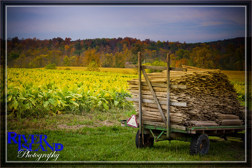 ohio fall field wagon farm foliage tobacco riverislandphotography