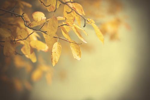 blue autumn brown white toronto ontario canada black tree fall leaves yellow canon leaf soft branch bokeh branches tan alienskin morningdewphotography t1i ef100l dofcream