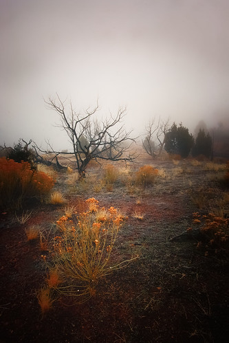 trees plants fog flora colorado niceshot desert foggy highdesert nationalparkservice nationalparks nationalmonuments desertplants coloradonationalmonument coloradoplateau canyoncountry redsandstone westerncolorado redrockcountry pinontree pinontrees deadpinon mygearandme
