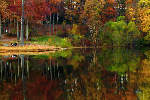 autumn friends color reflection fall leaves canon picnic afternoon cove maryland peaceful calm foliage 7d serene howardcounty scottscove bwcpl ef1740f40lusm