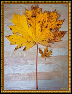 Mammoth Maple Leaf