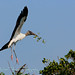 Nesting Wood Storks by Michael Pancier Photography