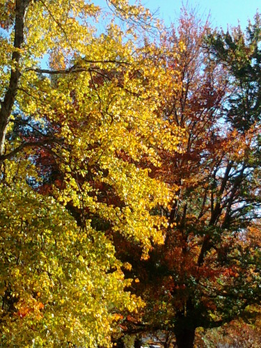 cameraphone autumn atlanta fall landscapes atl samsung