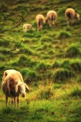 La Pastorale - Sheeeeeeep