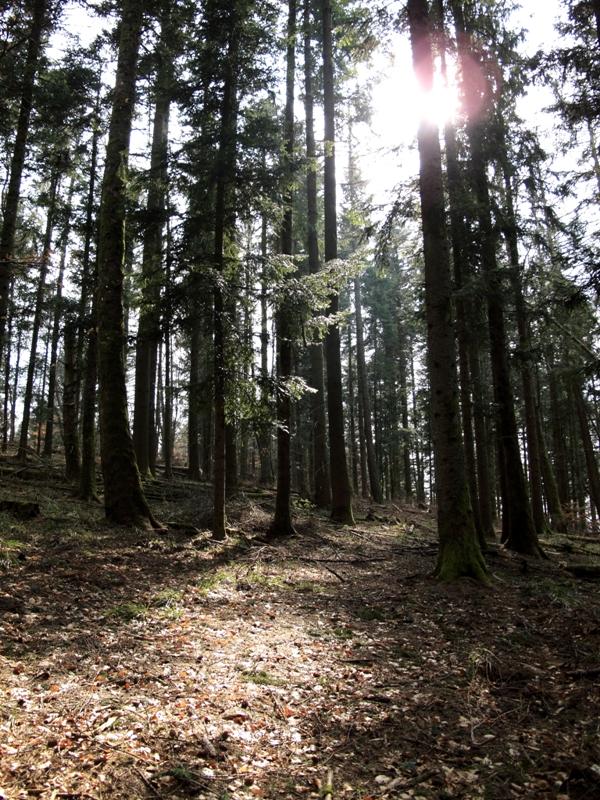 Soleil illuminant la forêt