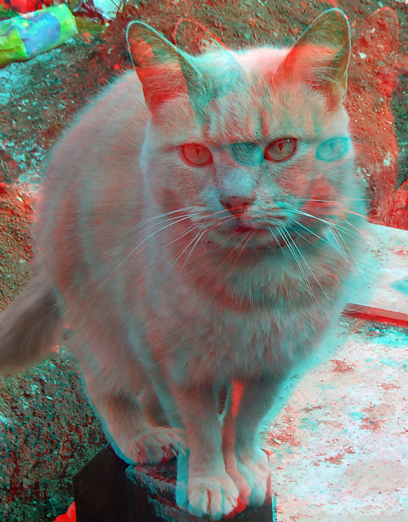 cat 3d anaglyph red blue glasses to view   a photo on