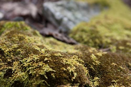 mossy.  maryland.