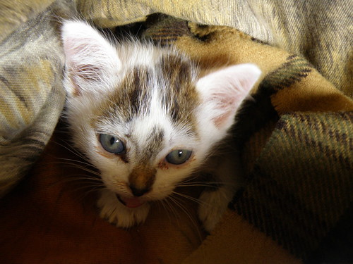 *  International Day of the Animals! -                                        The kitten is better...Still walks with difficulty but will be fine....