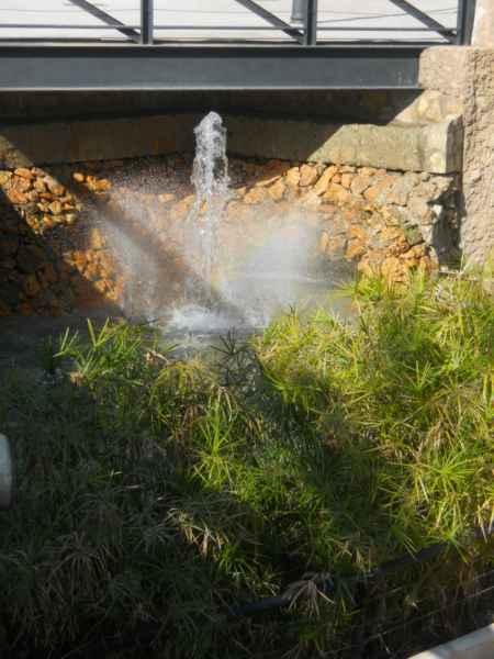 Jardín acuático con cyperus