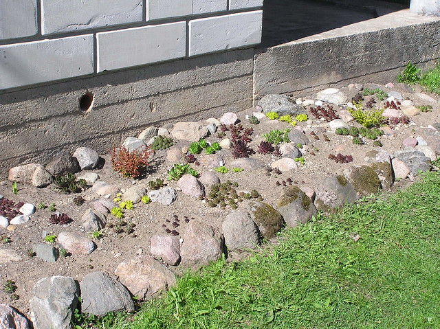 New rock-bed for houseleeks