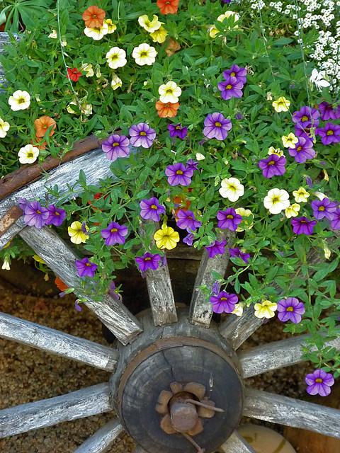 Header of jean flowers