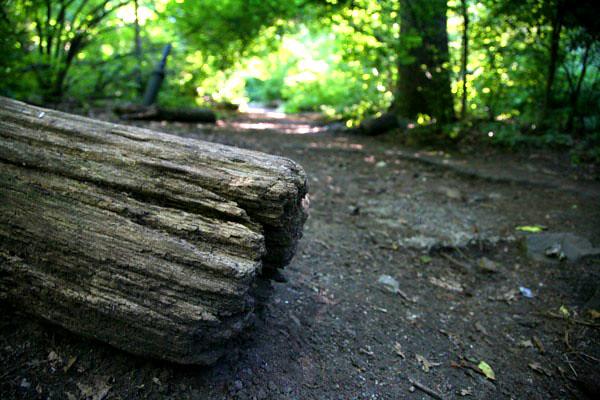 inwood hill park _beh-13