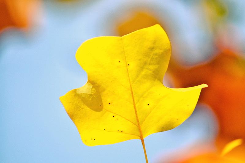 Herbstfarben anno 2011