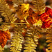 Autumn Fern & Leaves